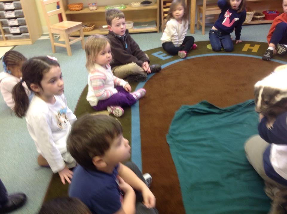 Skunk visitor