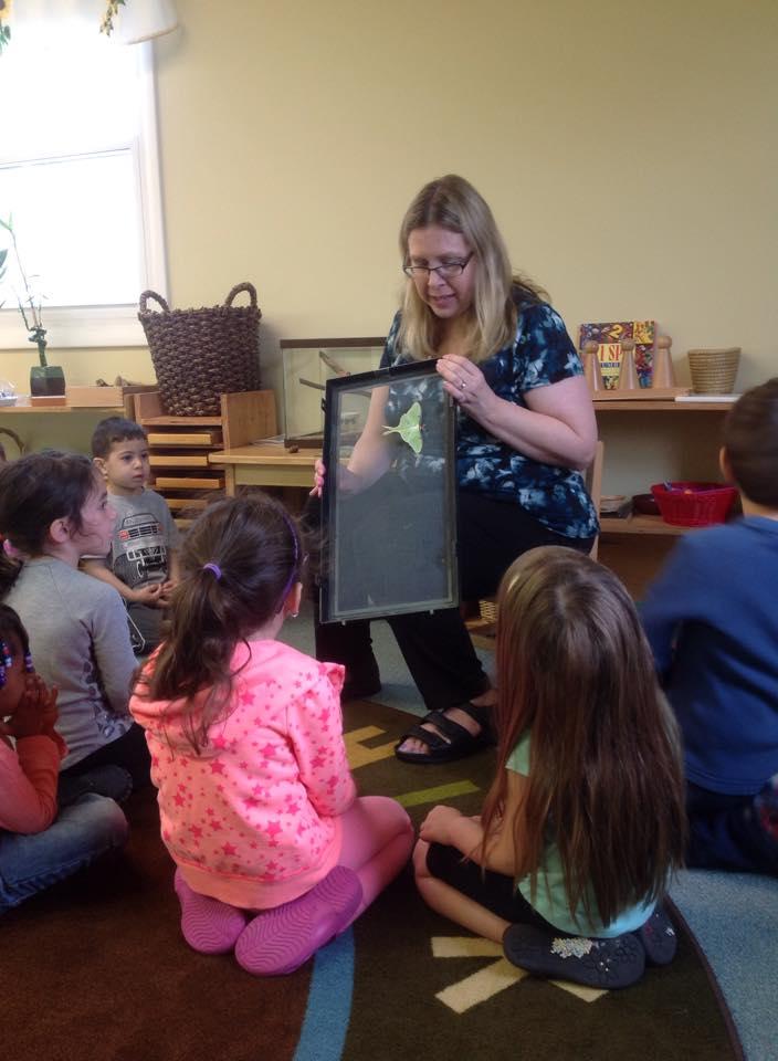 Luna moth in preschool