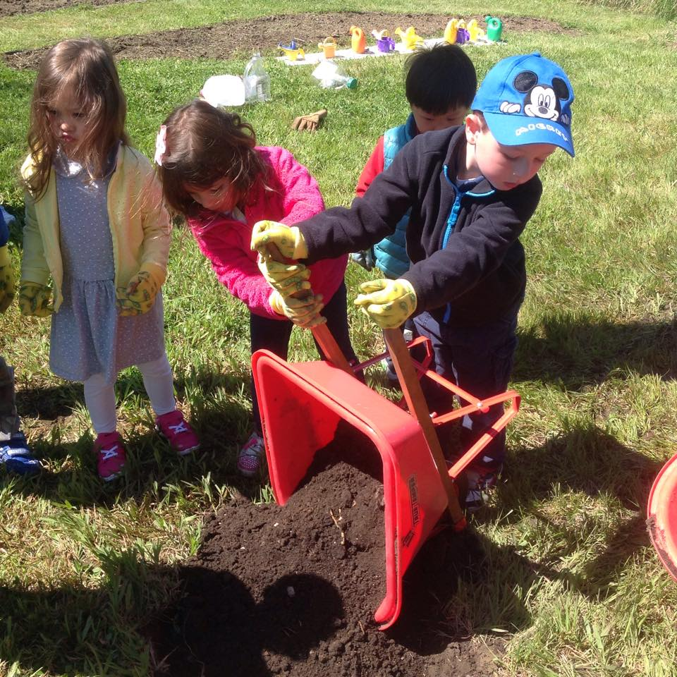 Teamwork to plant some little peach trees