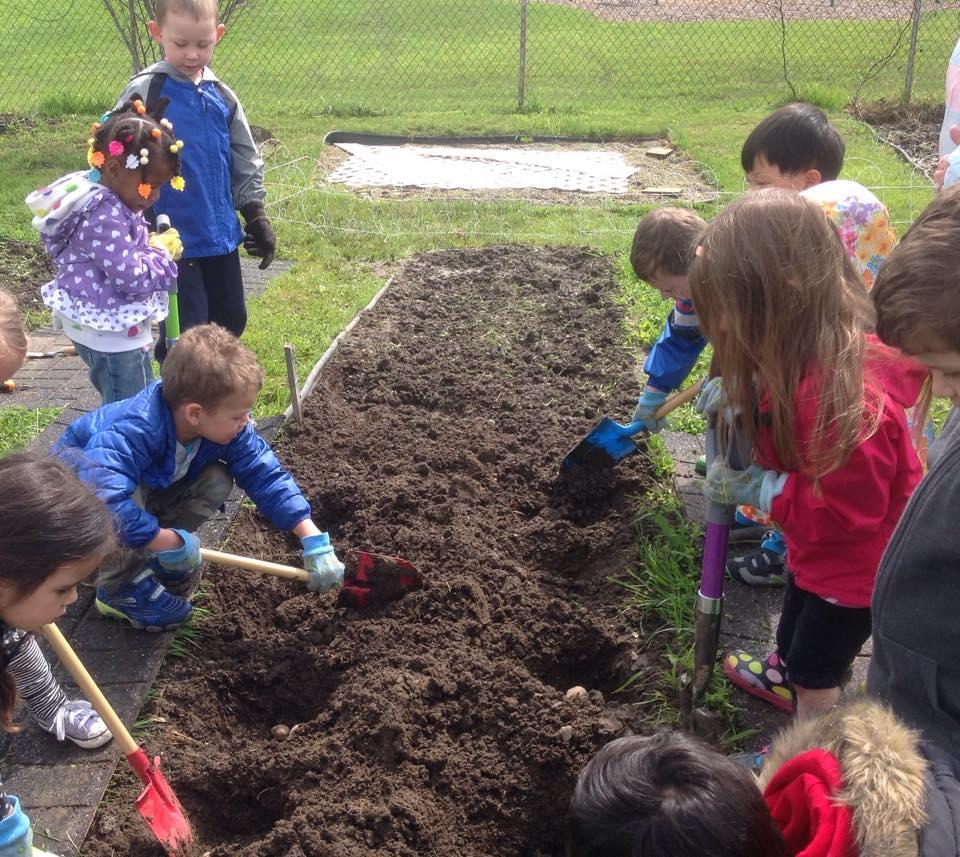 Planting more potatoes