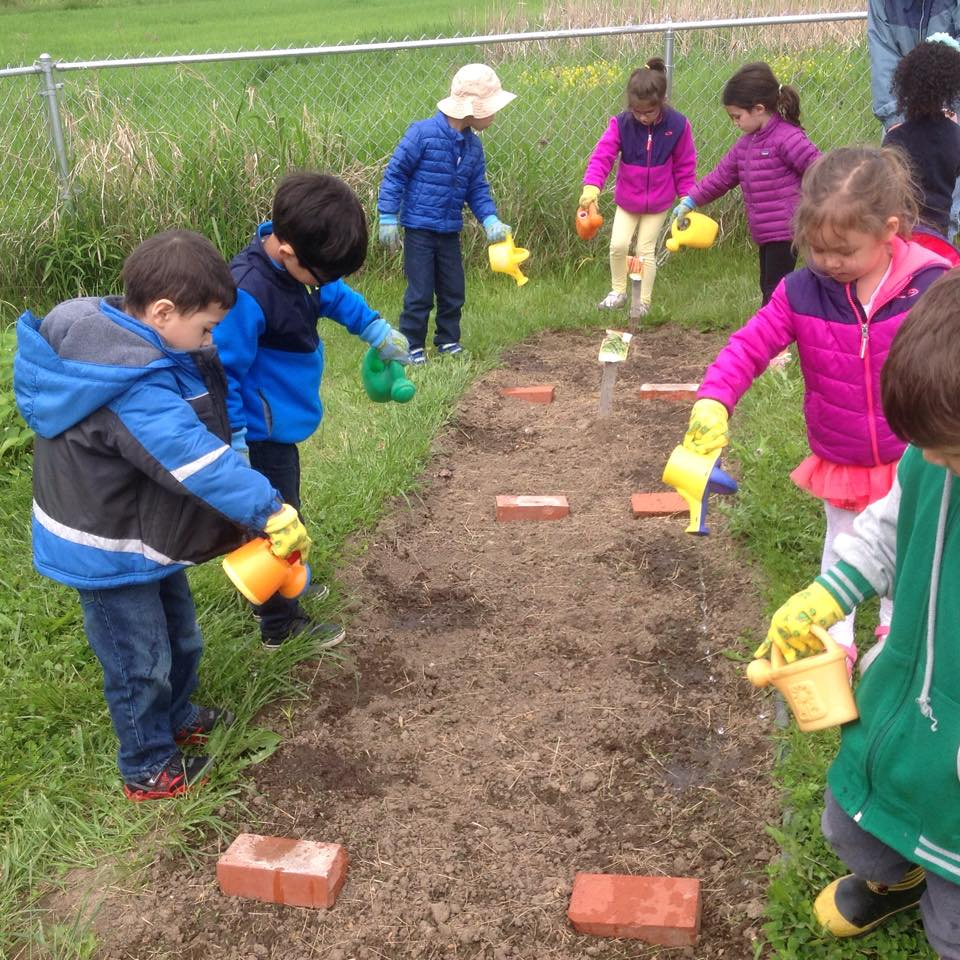Watering beans, peas, carrots and ourselves