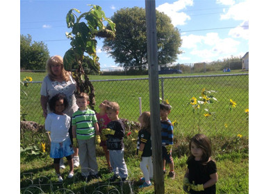 Canton Preschool Pick Sunflower