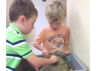 Canton Preschool Sunflower Seeds