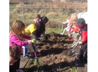 Preschool Canton Dig Potatoes