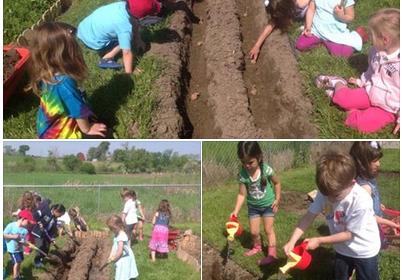planting potatoes 2016