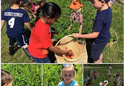 Picking Strawberries 2016 Childrens Garden Montessori Of Canton Preschool And Kindergarten