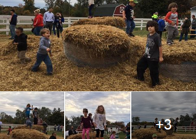 fun on the farm
