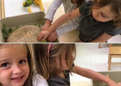 plucking sunflower seeds