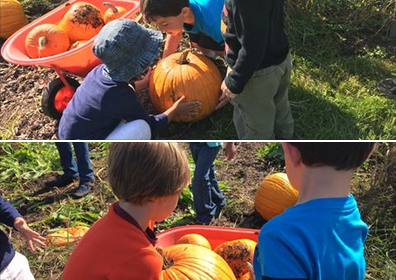 preschool picking pumpkins